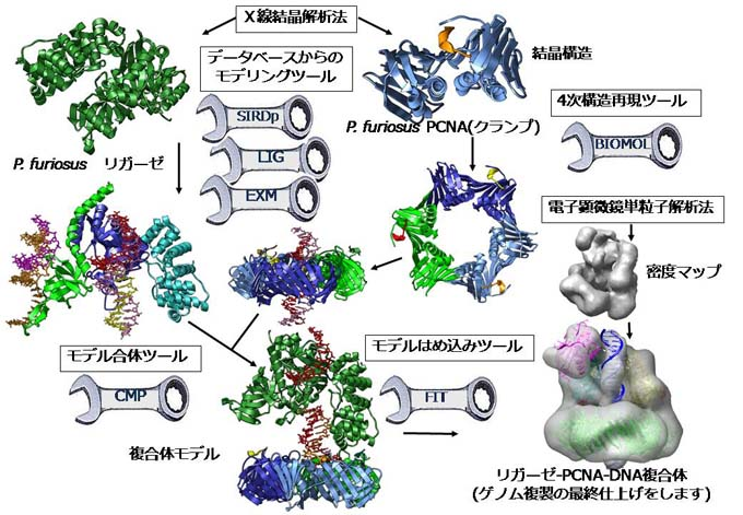 実践による超分子複合体モデリングシステムの開発 - BIRD NBDC