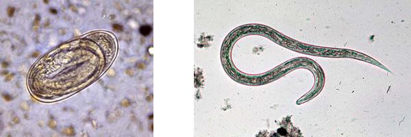 共同発表:消化管寄生虫に対する...