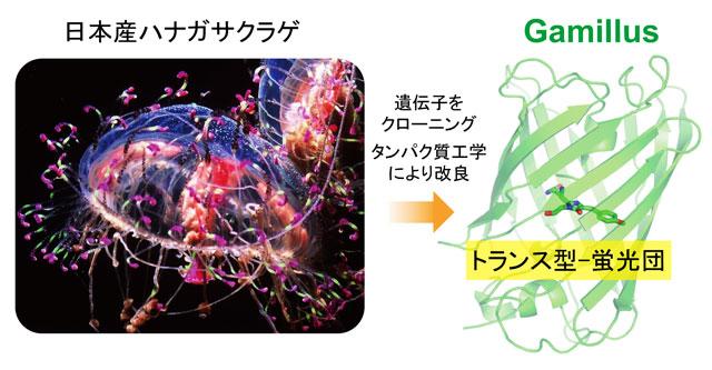 図1 Gamillus作成の概略図