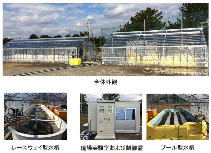 図2 姫路市の下水道管理センター「大的析水苑」に完成した培養施設