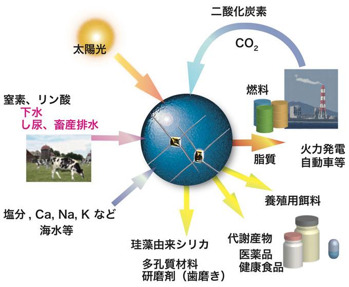 図4 珪藻を軸にした再生可能物質生産に基づく低炭素社会