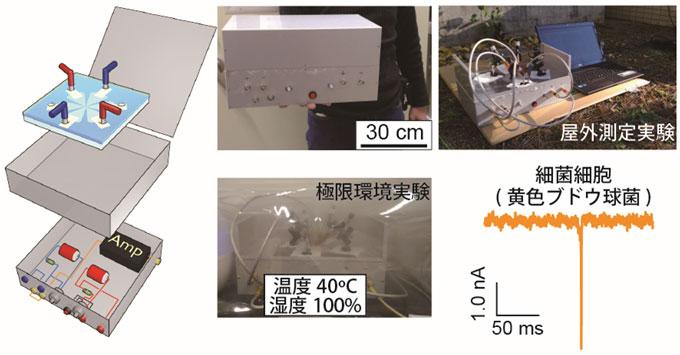 図 持ち運び可能な微生物センサーとそのセンサーを用いた実験風景及び細菌細胞検出結果
