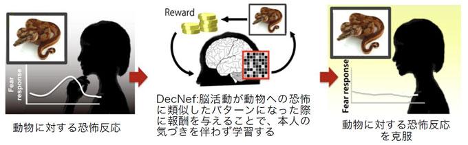 図1 DecNefを用いた恐怖反応の克服