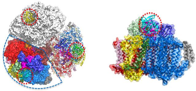 図2 光化学系Iとフェレドキシンの複合体構造