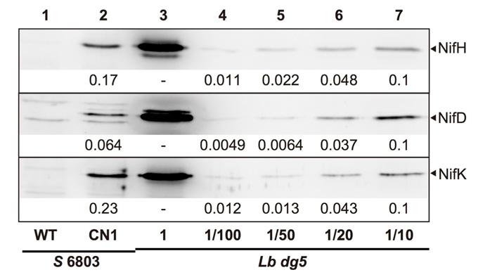 図3 ニトロゲナーゼタンパク質の比較