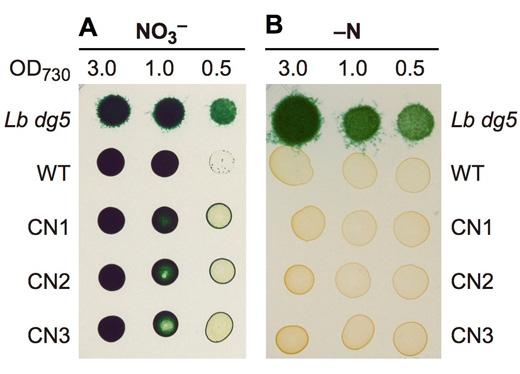 図4 窒素固定条件での生育の比較