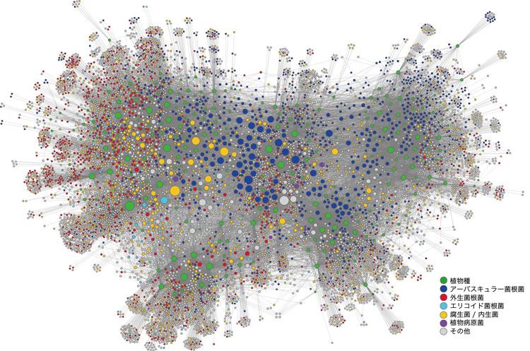 図1 北海道から沖縄にかけての日本列島に生息する真菌8,080系統とその宿主植物種で創生されるネットワーク