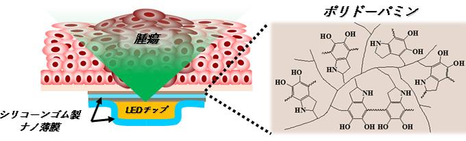 図3 生体模倣型接着分子ポリドーパミンを修飾したナノ薄膜による光源の固定