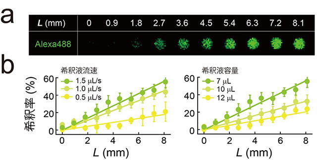 図2 マイクロチップ上での標的物質の濃度勾配の形成