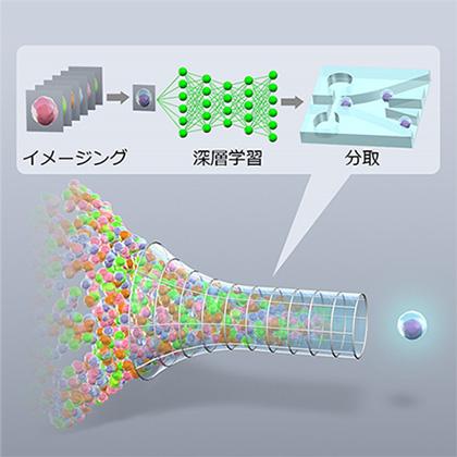 図1 本研究で開発したIntelligent Image-Activated Cell Sorterの模式図
