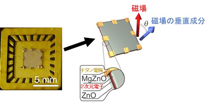 図1 酸化亜鉛試料の写真と構造の模式図