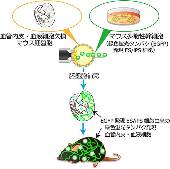 図1 本研究の概略図
