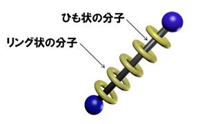 図1(a)ポリロタキサン分子の模式図