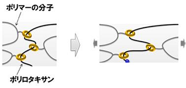 図1(b)ポリロタキサンを架橋した環動ポリマー構造の模式図