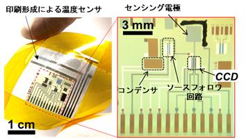 図1 開発した電荷転送型高感度フレキシブルpHセンサーとフレキシブル温度センサーデバイス