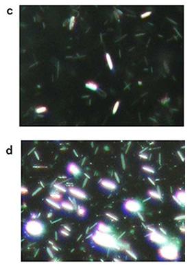 図2 (c)ランダムに配向した結晶板 (d)磁場で向きを調整した場合