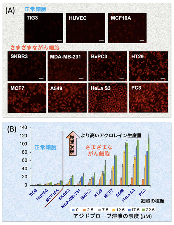図3 正常細胞とがん細胞から発生するアクロレインの検出