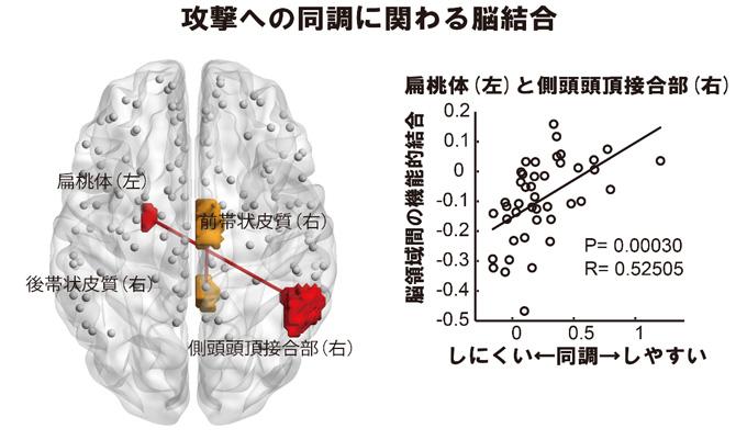 図8 攻撃への同調の程度と相関する脳の機能的結合強度