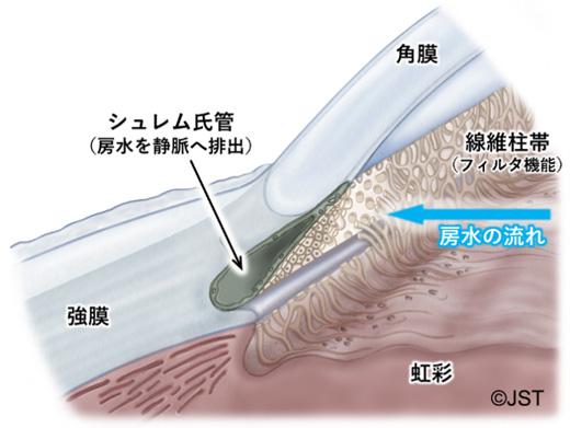 図1 ヒト眼球における角膜輪部と隅角の詳細構造