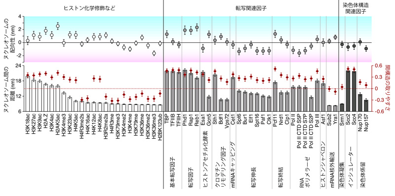 図4 エピゲノム因子によるヌクレオソームの配置構造の変化