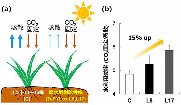 図3 光合成における節水性