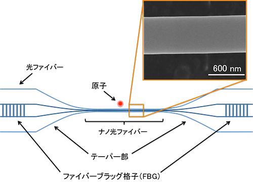 図1 ナノ光ファイバー共振器と原子を用いた共振器量子電気力学系の模式図