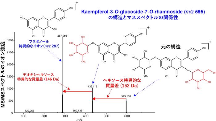 図1 代謝物の構造とMS/MSスペクトルの関係