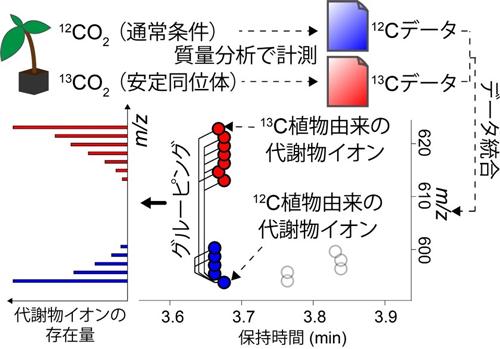 図2 代謝物を構成する炭素数の決定