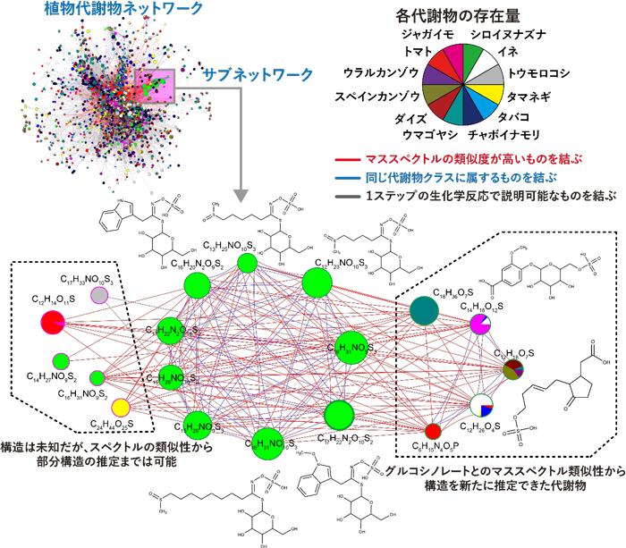 図3 植物代謝物ネットワークの応用例