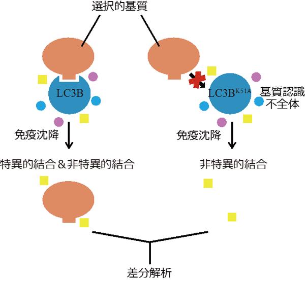 図3 新規選択的基質の網羅的探索のためのスクリーニング