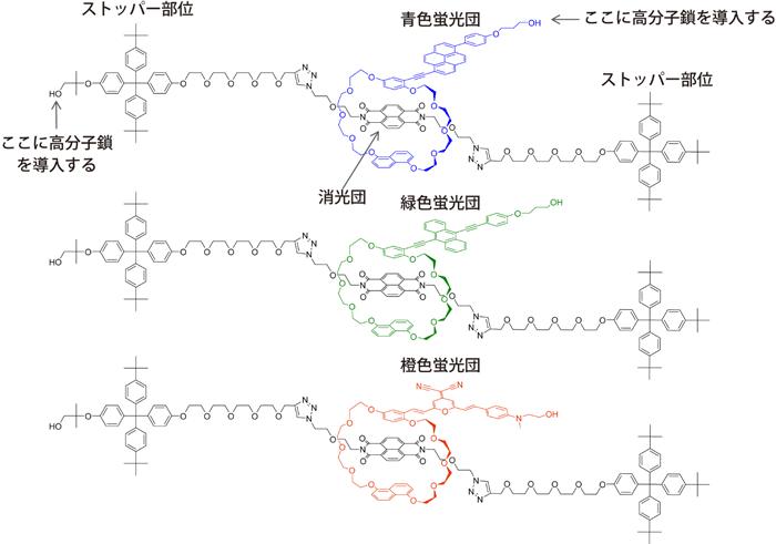 図3 3種類のロタキサン型超分子メカノフォアの分子骨格