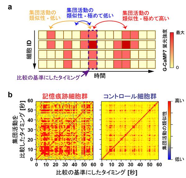 図3 新しい出来事の記憶中、記憶痕跡細胞は類似の集団活動パターンを繰り返す