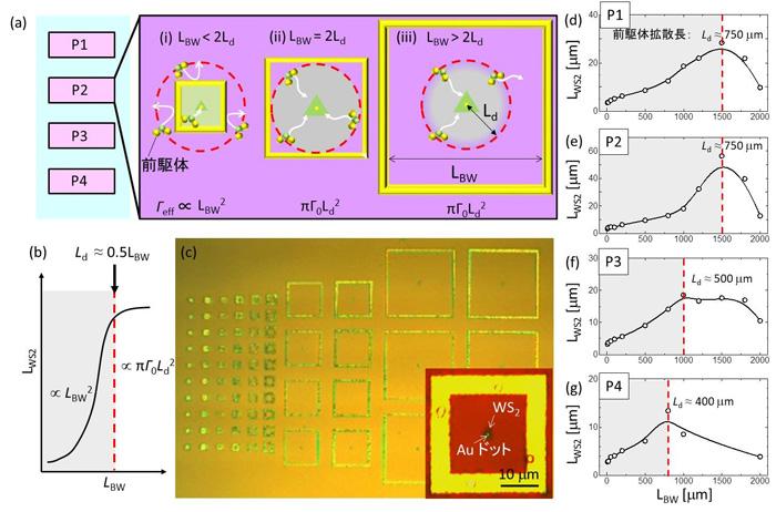 図3 拡散防止構造を利用した基板上での前駆体拡散距離(Ld)の計測
