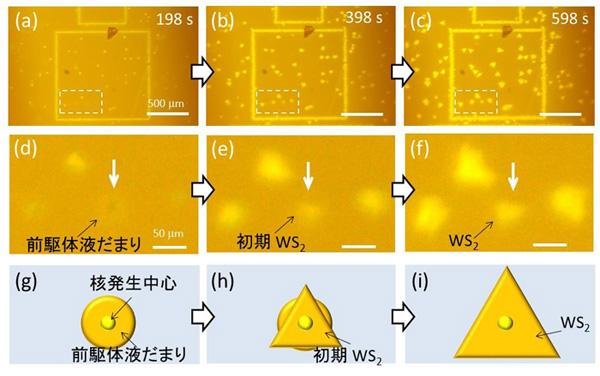 図4 その場観察で明らかにした前駆体液だまりとWS2成長過程の関係