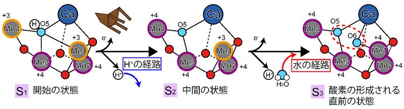 図2 酸素分子を形成する反応における触媒部分の立体構造の変化
