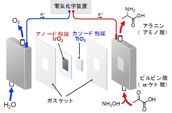 図1 フロー型アミノ酸合成電気化学セルの構成