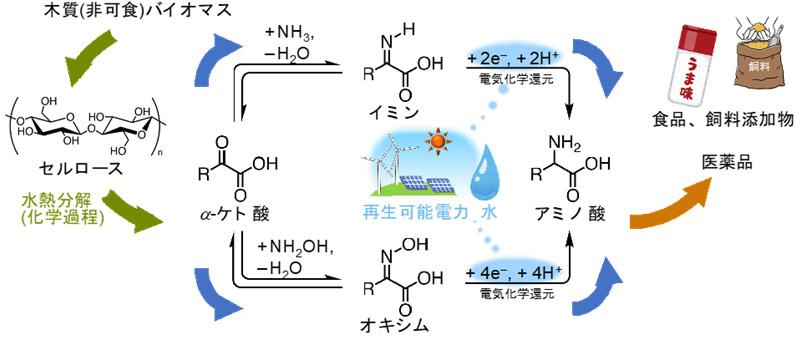 図2 バイオマスと水を原料とするアミノ酸合成のフロー
