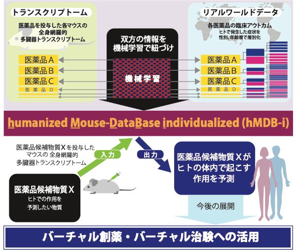 図1 「hMDB−i」(humanized Mouse DataBase, individualized)の仕組み