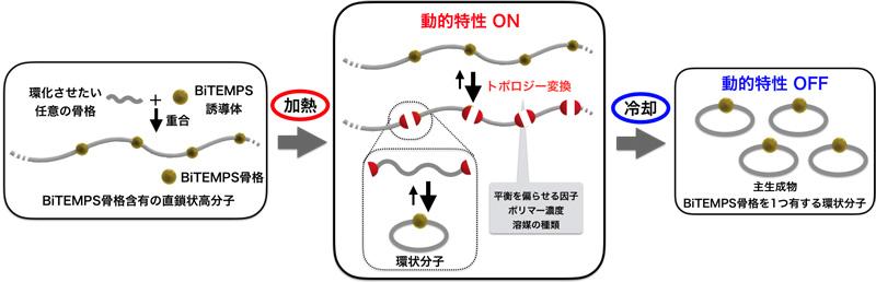 図2 BiTEMPSの動的特性(on-off制御)を利用した環状化合物・高分子の合成法