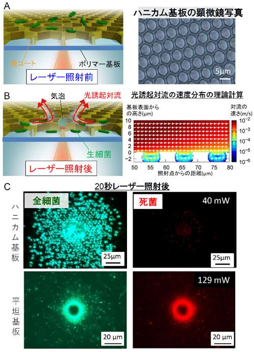 図1 ハニカム基板による生細菌の高密度光濃縮