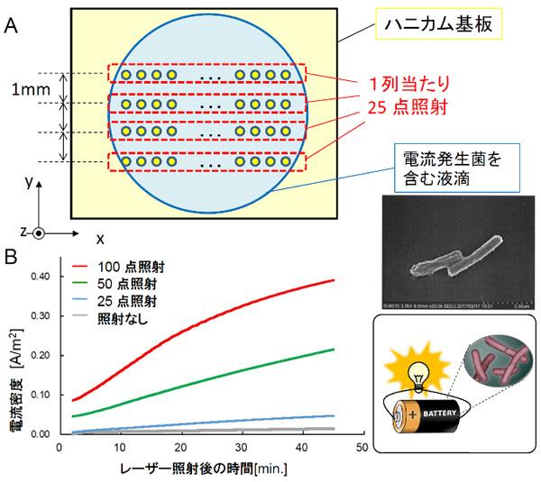 図4 逐次多点照射による電流発生菌の捕捉と電流密度増大
