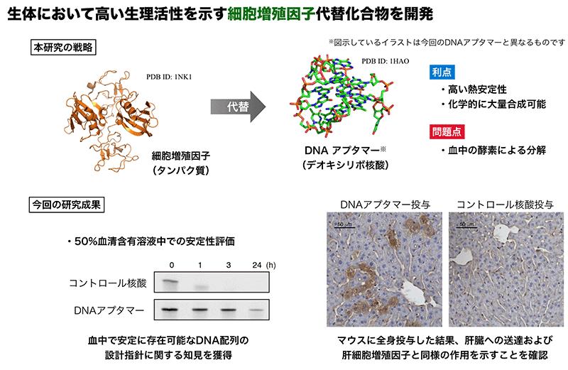 図 本発表の概要(From Sci. Adv. 6 : eaay2801 (2020). This work is licensed under CC BY-NC (http://creativecommons.org/licenses/by-nc/4.0/))