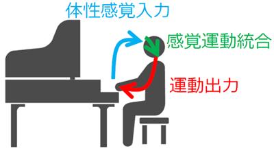図1 体性感覚と運動出力の関係(感覚運動統合)