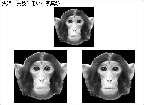 図3 実際にサルに対して、実験で...